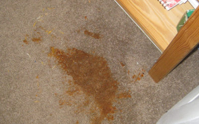 Carpet Cleaning and Care Concerns